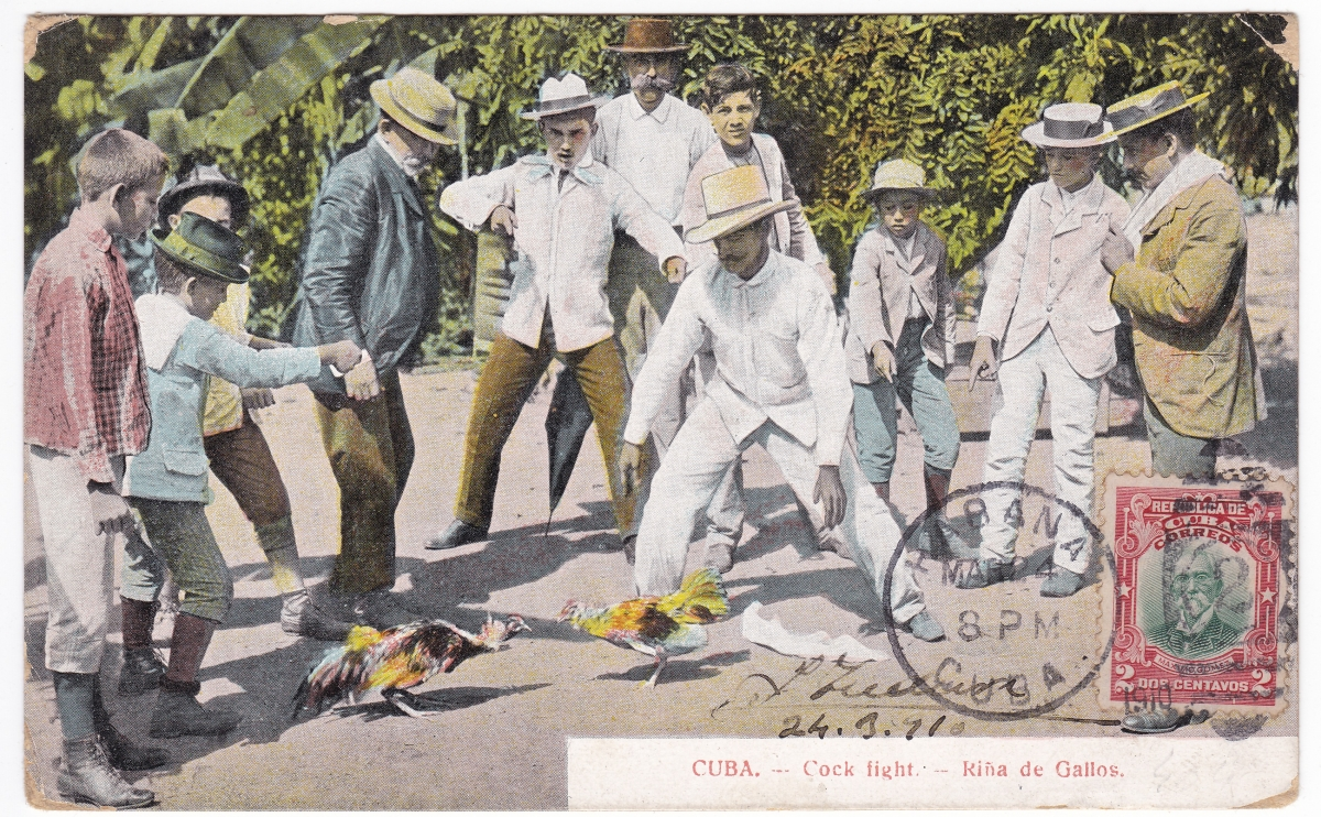 """CUBA. –Cock Fight- Riña de Gallos."" Photomechanical postcard. Postmarked April 1910. Unspecified publisher"